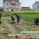 如何选择果桑苗的种植时间