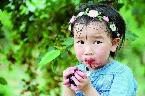 吃桑葚是童年最美好的回忆